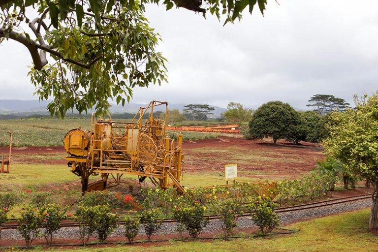 Oahu Dole plantation gardens