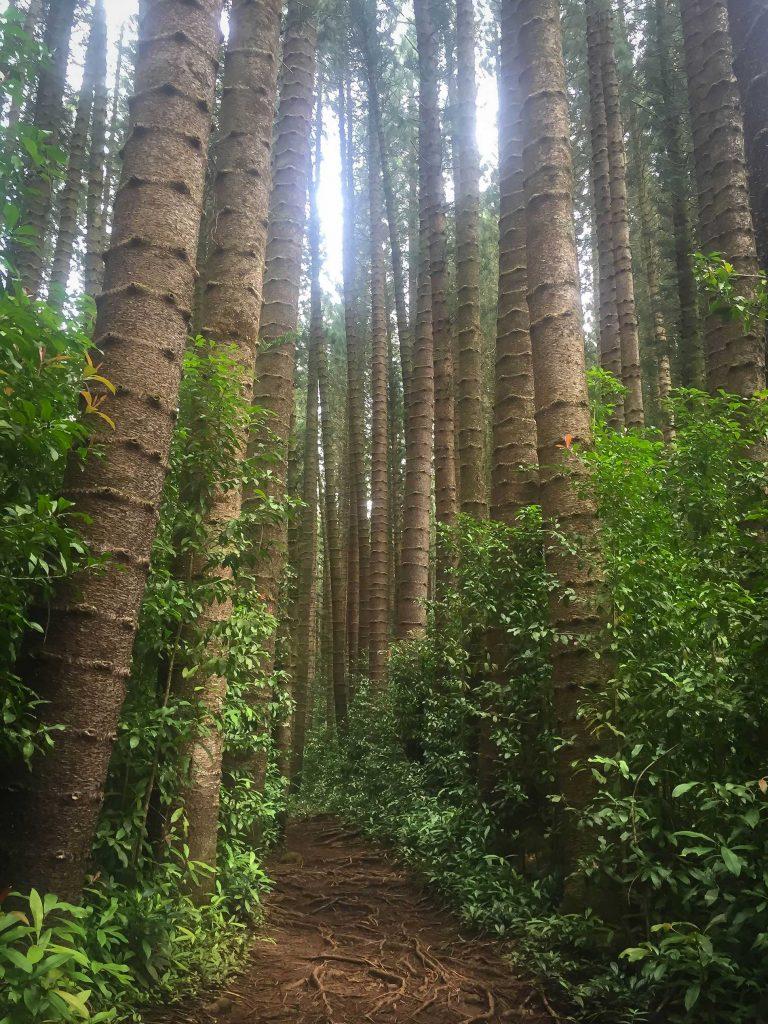 Judd Trail Oahu Hawaii