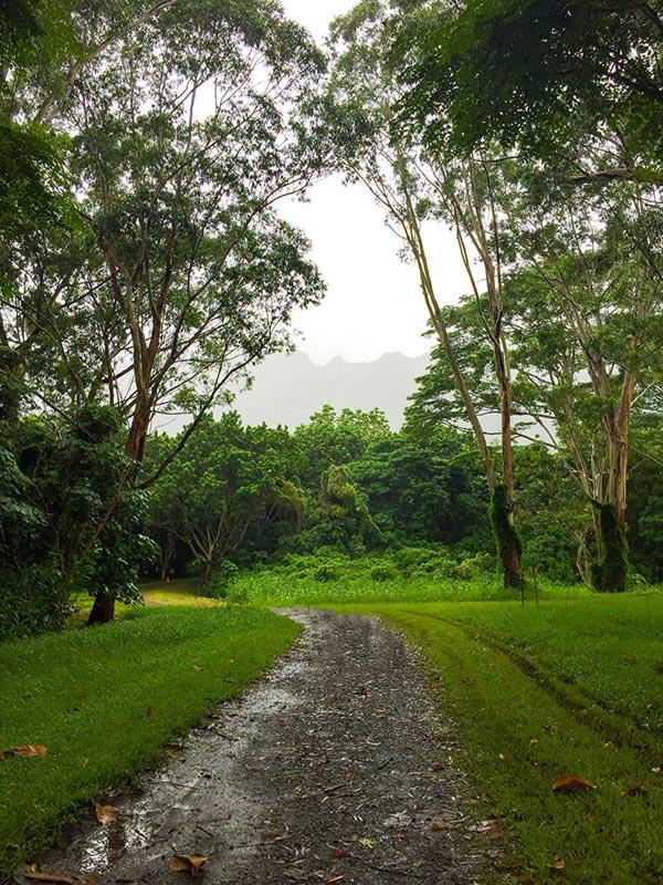 Ho'omaluhia botanical gardens oahu walking path