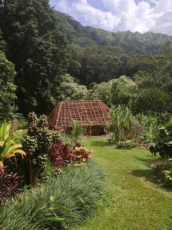 Lyon Arboretum Oahu view of gardens