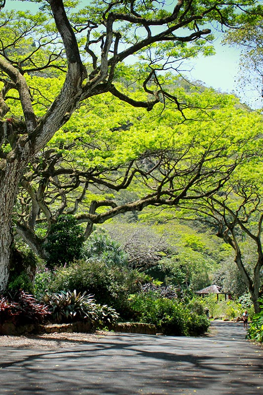 Waimea Valley Oahu paved path