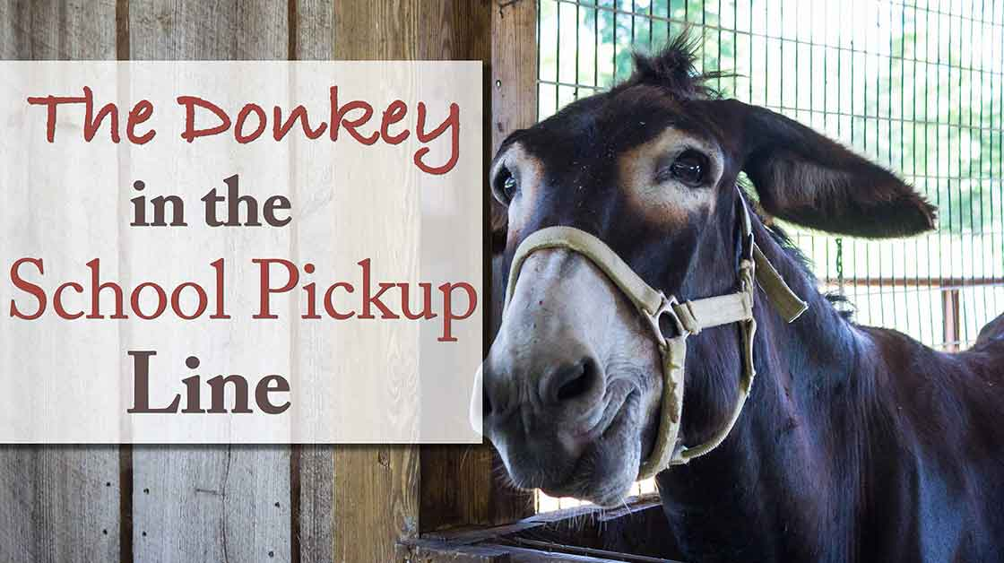 The donkey in the school pickup line