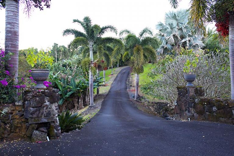driveway on the big island surround by palm trees