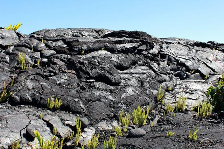 mounds of black lava with bright green vegetation starting to grow