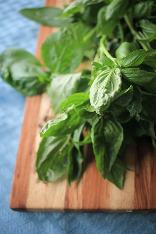 fresh basil from the garden on a wooden cutting board
