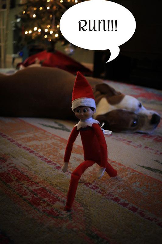 elf running from dog